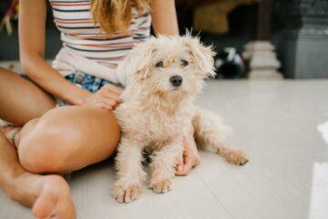 Hund sidder ved siden af pige